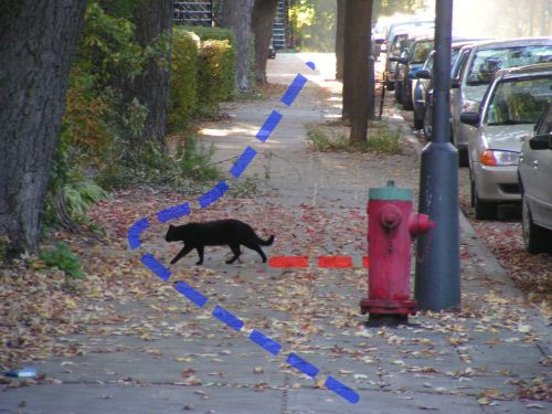 Траектория обхода кошки по кривой, делая большой крюк от назначенного пути по тротуару